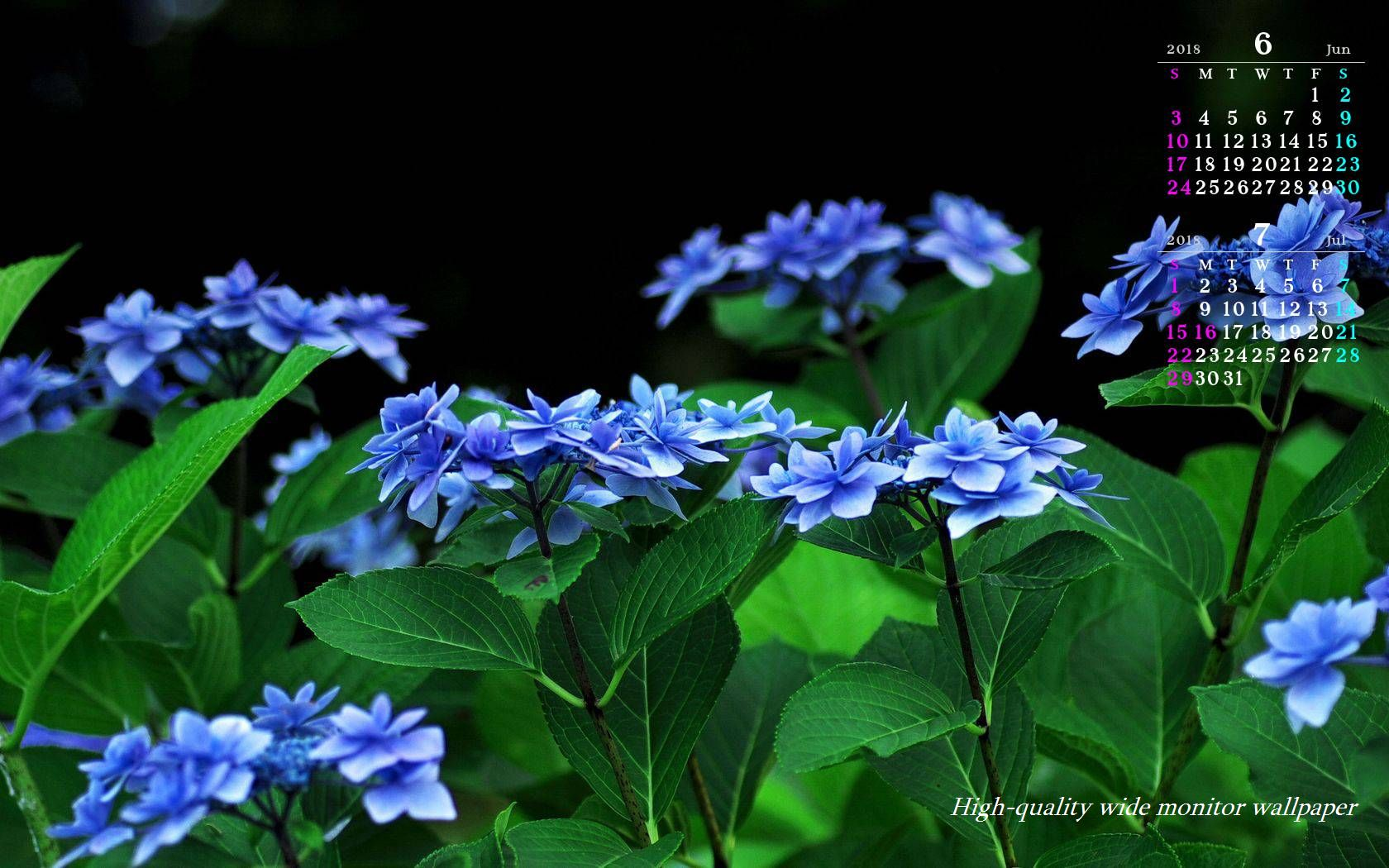 季節の壁紙「紫陽花」